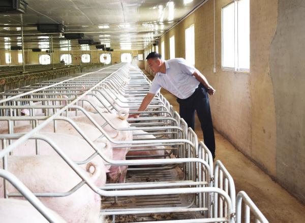 """图片说明:有了""""智慧养猪""""技术,只需要6个工人就可以高水平地管理一个年出栏10000头的养猪场.jpg"""